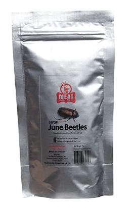 Meat Maniac June Bugs | Edible Insects | Salted June Beetles